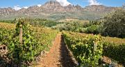 Awash Winery écoule chaque année 7 millions de litres de vin sur le marché local. Castel mise sur le marché export pour placer ses 1,1 million de cols.
