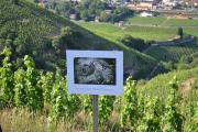 Les photos des Monstres des Vignes prennent place tout au long du parcours, permettant au marcheur de s'arrêter et de prendre du recul pour admirer les paysages.