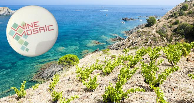 Préserver et promouvoir les cépages originaux de la Mediterranée, voici les buts principaux de l'association Wine Mosaïc.