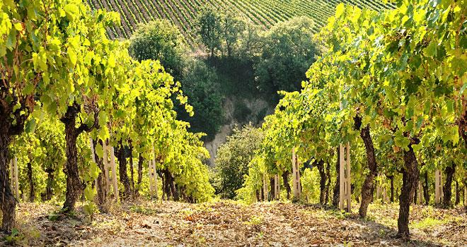 Viticulture durable en Italie.