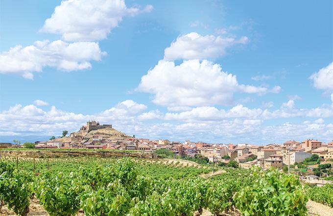 Organisation internationale de la vigne et du vin - Une viticulture «innovante dans un esprit de conservation» pour Pau Roca, directeur de l'OIV