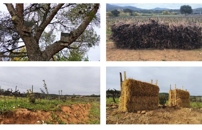 François Combard, Figuières (Var) - La biodiversité en renfort des insecticides contre les vers de la grappe