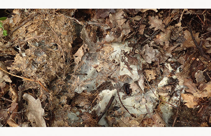 Agronomie - Connaissez-vous la lifofer pour rééquilibrer les sols?