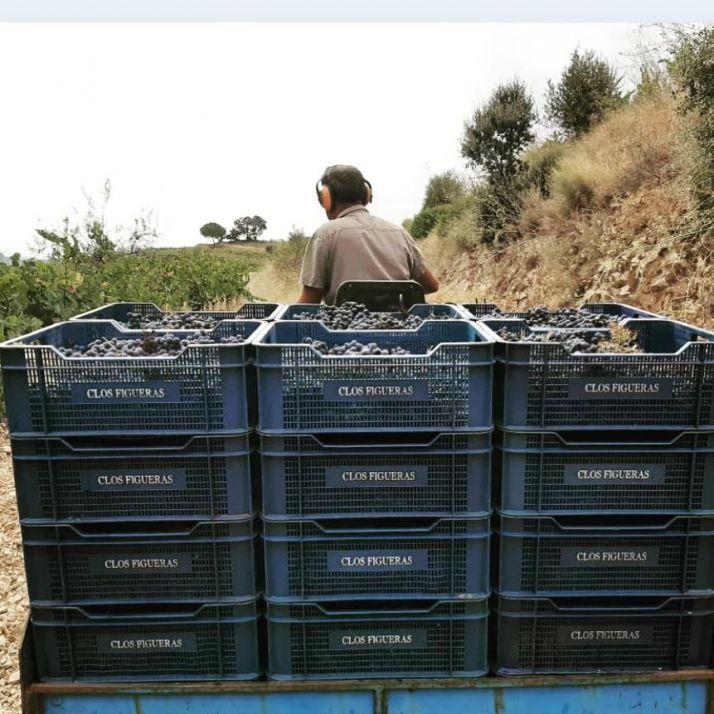 Les vendanges se font à la main et les raisins sont récoltés dans des caisses de 12 kg : « pour ne pas écraser le raisin et pour ne pas casser le dos des vendangeurs », explique Anne Cannan.