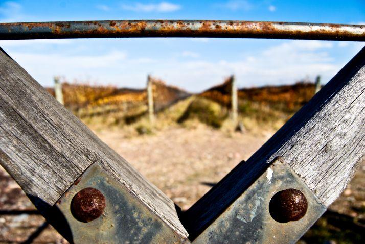 En Argentine, les vignes sont toutes clôturées (Piedra Negra)