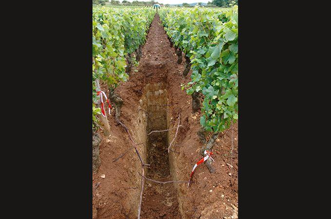 «La biodisponibilité du cuivre varie notamment en fonction du pH du sol, des teneurs en MO, en carbonates, et en argile», explique Laurence Denaix, directrice de recherche à l'Inra de Bordeaux.