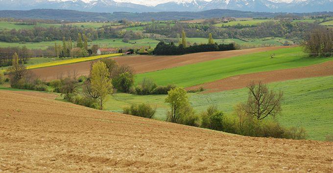 Les biens ruraux loués à long terme ainsi que les parts de groupements forestiers agricoles (GFA), des groupements fonciers viticoles (GFV) ou de groupements agricoles fonciers (GAF) sont exonérés à 75 % d'IFI. C. Milou.