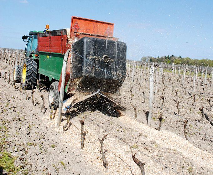 Le domaine La Champinière (Cour-Cheverny) a choisi de tester un paillage de miscanthus dans ses vignes, sur le cavaillon, contre les stress hydriques et l'enherbement. Photos: O. Lévêque/Pixel Image