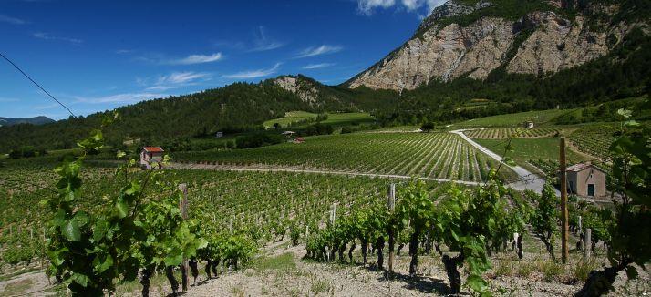 Le vignoble Diois. Photo : DR