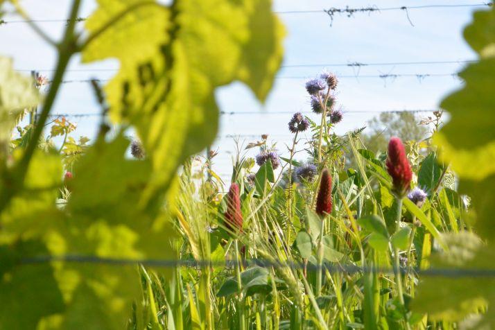 Comment développer une vision plus holistique de la viticulture ? Photo : DR