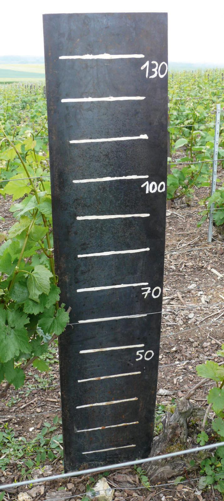 La plaque de fer rouillée permet de régler la hauteur des mains mais aussi leur orientation par rapport à la vigne. Photo : CA 51