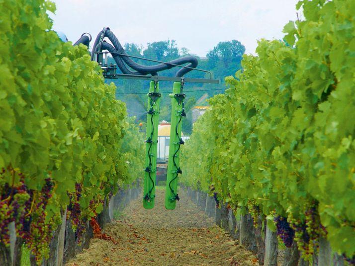 En Aquitaine, le Resaq Viti Bio teste deux produits de biocontrôle, l'Armicarb et le Botector dans des conditions «viticulteurs». © S. Favre/Pixel Image