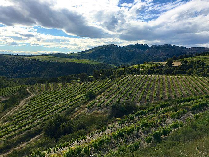 Paysage viticole des dentelles de Montmirail. Photos: A. Domenach/Pixel image