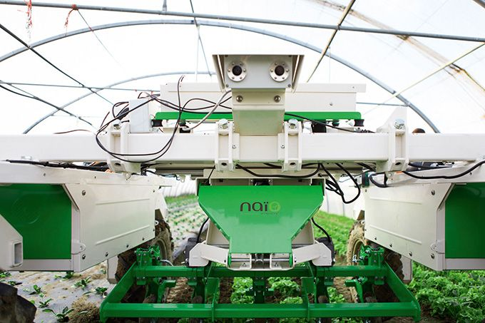 L'enjambeur Dino, porte-outils, désherbe la vigne sous le rang. Photo : Naïo Technologies