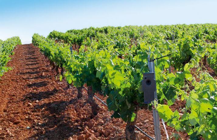En 2017, le Puffer de De Sangosse a conquis 5% des parts de marché de la confusion sexuelle contre l'ensemble des tordeuses en viticulture. © De Sangosse