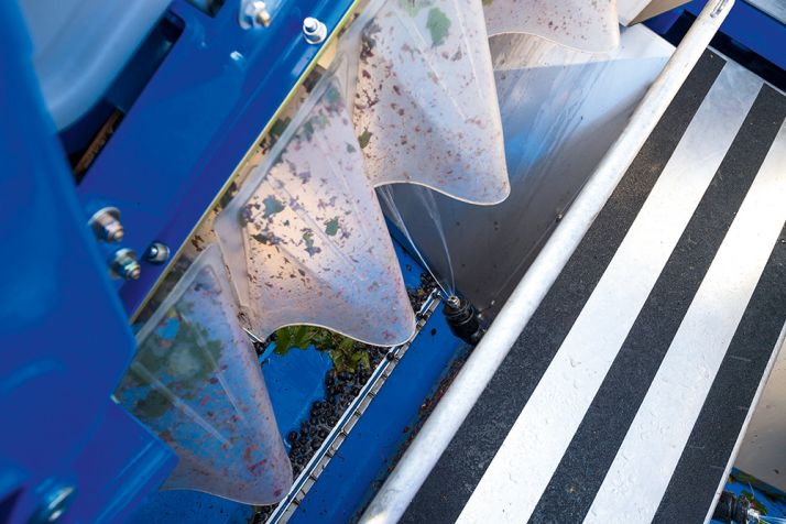 Le ramassage des raisins commence 8cm plus bas qu'avec les anciens modèles. © New-Holland