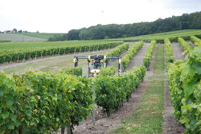 Entre 2013 et 2017, les résultats sur les essais de vignes résistantes à Bordeaux et Colmar ont montré une très bonne maîtrise du mildiou et de l'oïdium avec une économie  en fongicides de 80 à 90%. Photo: O.Lévêque/Pixel Image
