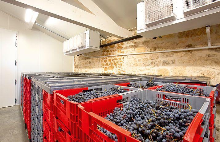 Le château La Gaffelière vinifie exclusivement des raisins rouges. Depuis 2013, le domaine est équipé d'une chambre froide permettant de stocker pendant un à trois jours les raisins ramassés dans des cagettes ajourées de 10kg.  © S.Favre/ATC