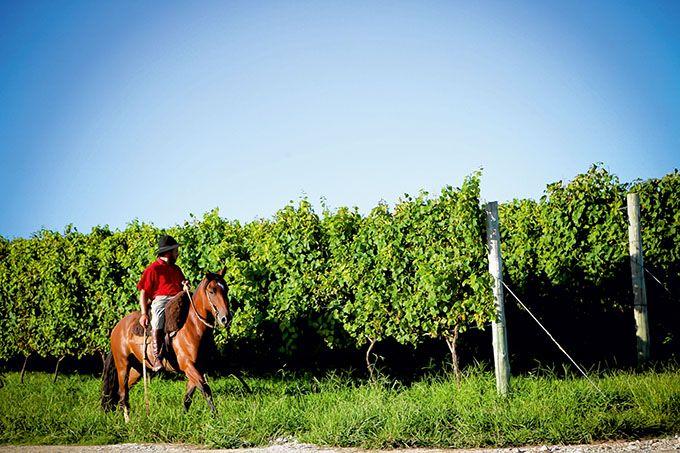 Le Brésil importe du vin mais en produit aussi localement dans trois régions du pays.