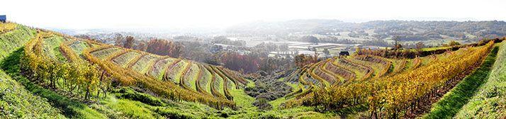 Le vignoble produit annuellement 73000 bouteilles (récolte 2018), sur 18ha vendangés pour le moment. © Cave Coteaux de la Vézère