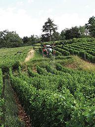 En France, la réglementation sur les traitements aériens par drone est très contraignante. Photo : Drone+