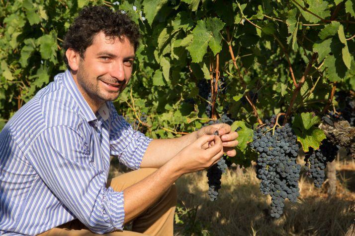 En adaptant la fertilisation et l'enherbement aux différentes zones de vigueur, Julien Bonneau a pu améliorer  la qualité de ses vins. Corinne Couette