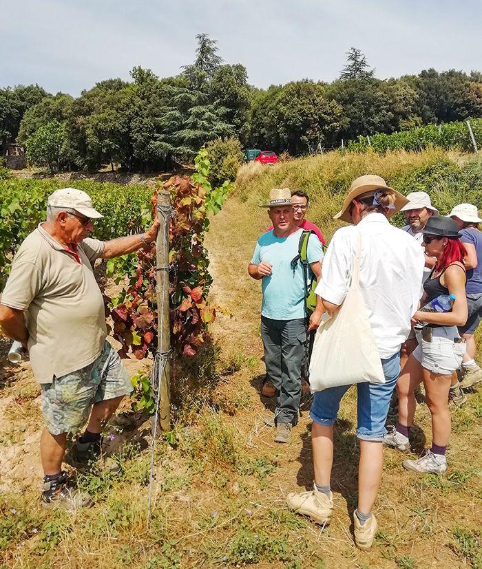 Stéphane Mallié, lors d'une journée de prospection FD au sein de l'AOC Faugères, entouré par les vignerons volontaires.