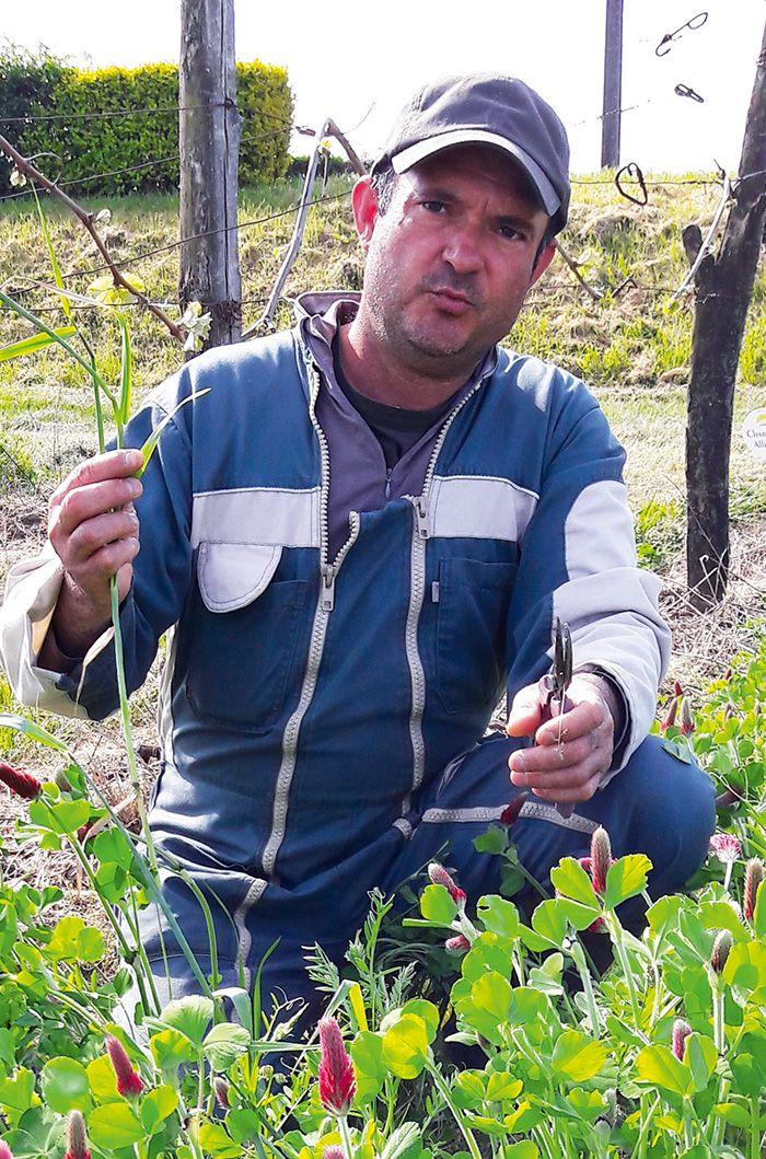 Laurent Curaudeau, vigneron à Cozes (Charente-Maritime).