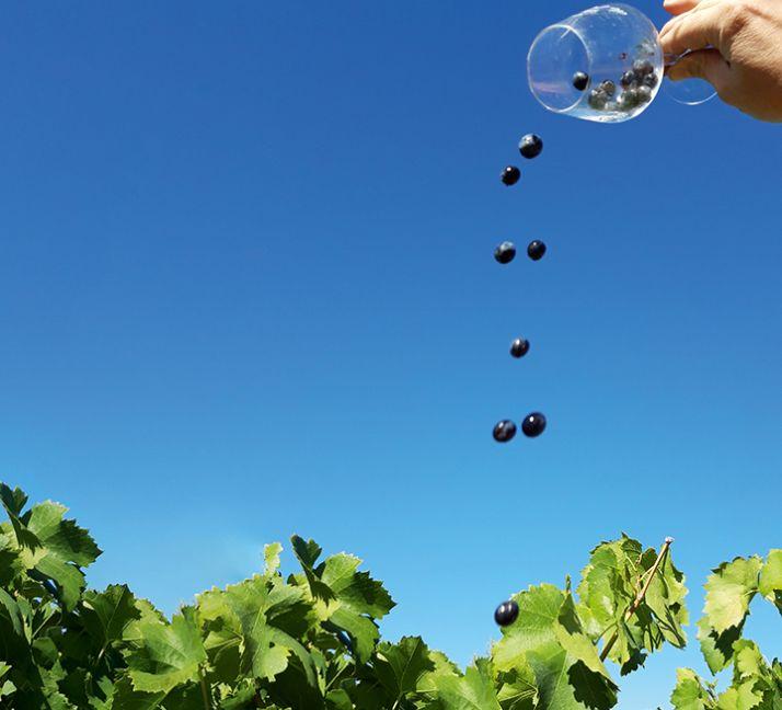 Domaine de l'Orviel (Gard) : qualité des vins et bonne connaissance  des marges.