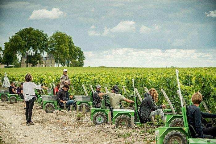 Dix-huit chariots électriques ont été achetés par le Château Pichon Longueville Comtesse de Lalande. Les équipes s'en servent pour l'effeuillage, l'épamprage, l'éclaircissage et le palissage des plantations.