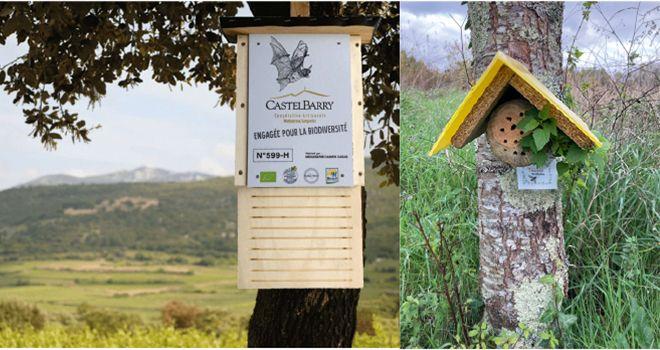 La Cave de Castelbarry, Vignerons engagés depuis 2017, œuvre pour les chauves-souris. Les Caves de Rauzan ont implanté des nichoirs pour les abeilles sauvages.  Photos : Cave de Castelbarry/Caves de Rauzan