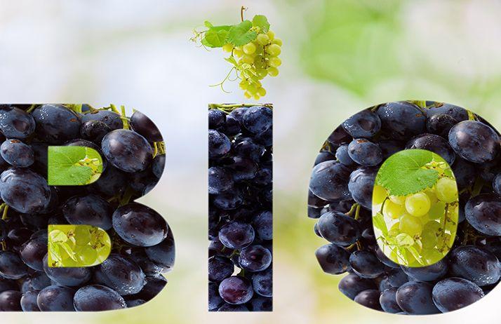 Où exporter du vin bio en 2022?