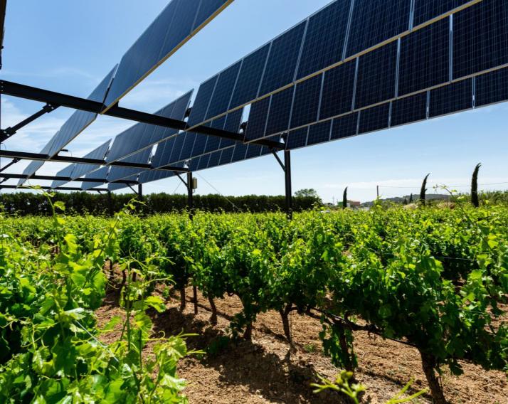 Agrivoltaïsme dans les vignes, par Sun'Agri. Photo Sun'Agri