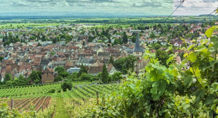 paysage viticole en Alsace