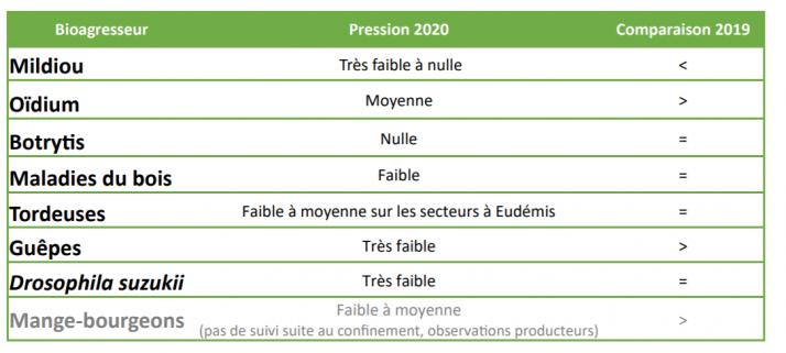 Les vendanges 2020 en Lorraine sera globalement saines, épargnées par les malades et les insectes ravageurs.