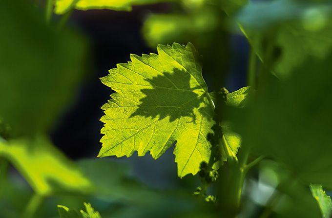 Le segment des «biostimulants» est en plein boom au niveau mondial avec une croissance annuelle à deux chiffres. Photo : fotolesnik/fotolia
