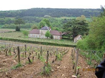 En Bourgogne, la végétation de la vignea  2 à 3 semaines d'avance sur le millésime 2019.