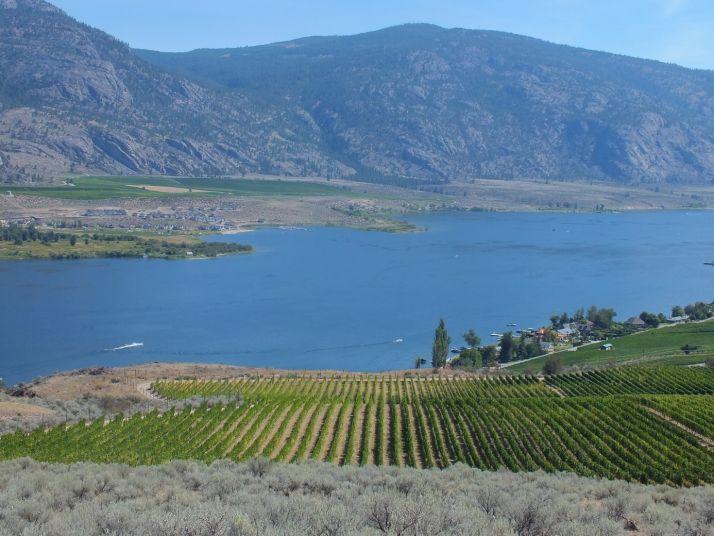 La vallée de l'Okanagan au Canada  vue depuis  le domaine OSOYOOS LAROSE  (Adrien Badet)