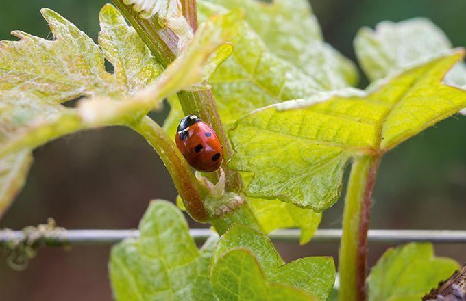 certification bio viticulture vins