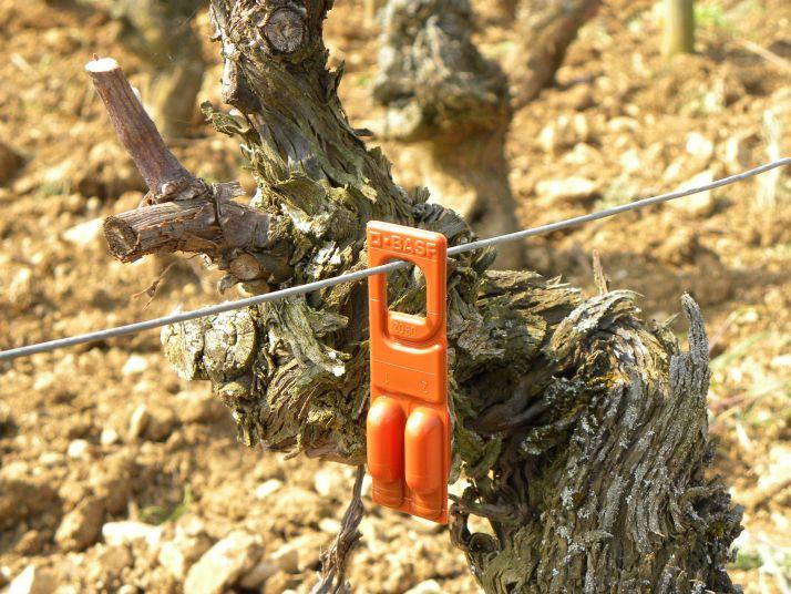 Diffuseur Rak de BASF dans les vignes