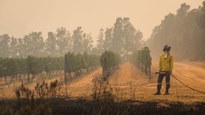 feu-afrique (c) Justin Sullivan / www.winespectator.com