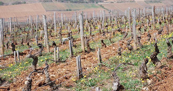 D terminer son type de sol en quelques clics mon viti for Chambre agriculture bourgogne