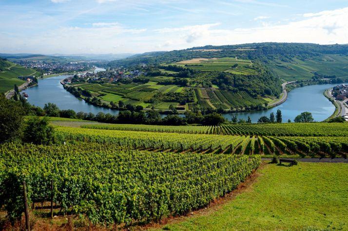 Le Luxembourg est aussi un pays producteur de vin avec 1289ha de vignoble, soit 12,5 millions de litres produits en 2015. Le crémant représente 22% de la production viticole luxembourgeoise.  © Valery Shanin