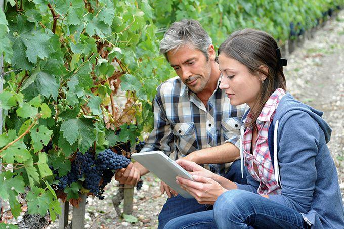 Le conseil en viticulture existe sous de multiples formes, pourtant certaines attentes restent encore difficiles à satisfaire. Photo : goodluz/fotolia