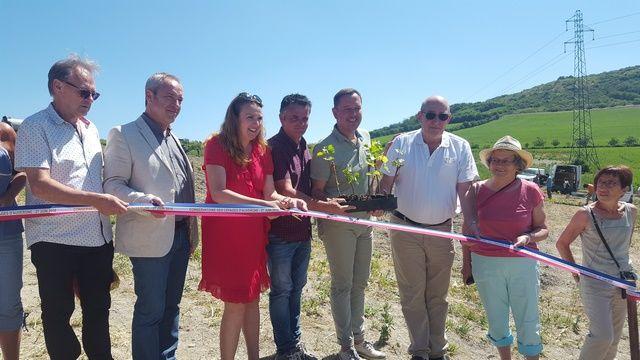 Le conservatoire des cépages auvergnats a été inauguré le 27 juin 2018 à Cournon.
