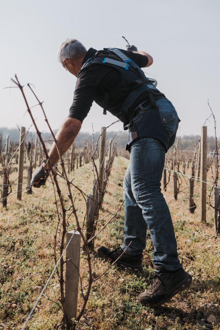 Dans les vignes du château Lagrange dans le Médoc, les salariés testent différents harnais de posture (Lycia Walter)