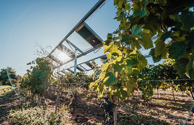 Le pilotage des ombrières est assuré par des algorithmes prenant en compte les besoins de la plante et les données provenant des capteurs disposés dans la culture.  Photo : Ombrea