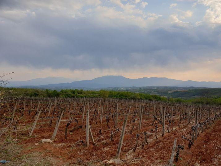 Paysage viticole autour de Rahovec, capitale viticole du Kosovo.
