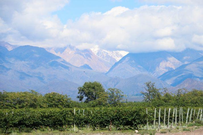 Vignes de la Piedra Negra en Argentine