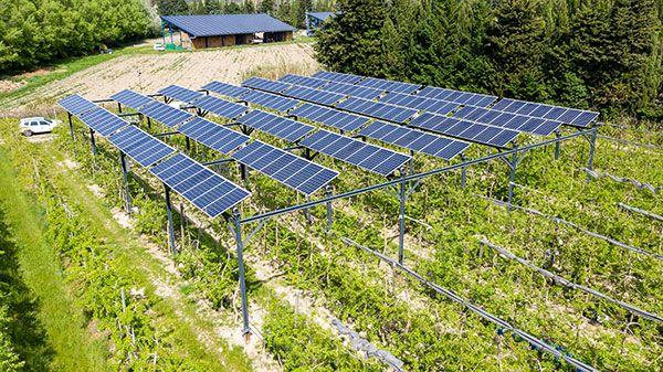 viticulture photovoltaïque
